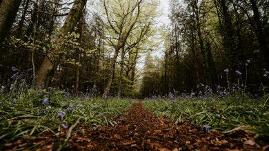 Photo of De beste potgrond voor je tuin