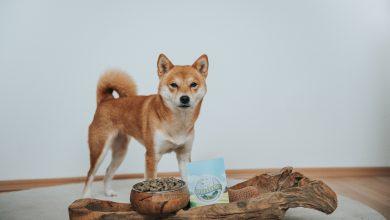 Photo of De voordelen van graanvrij hondenvoer