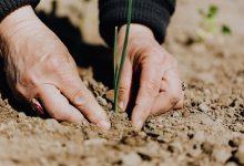 Photo of Checklist: Tuin zomerklaar maken!