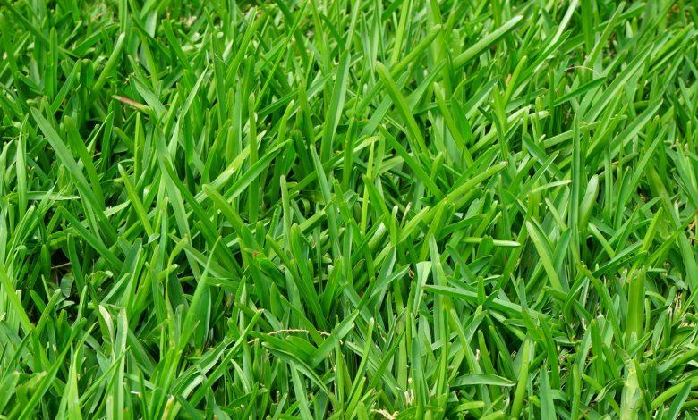 Photo of Een perfecte grasmat in je tuin
