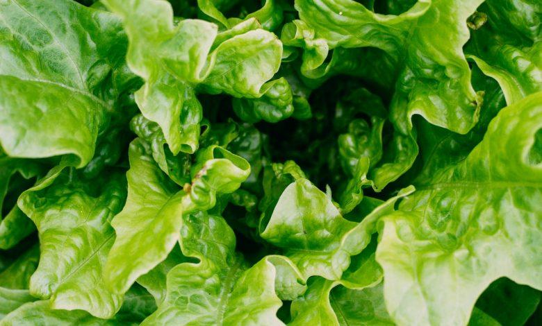 Photo of Met deze tips kan jij ook groenten kweken