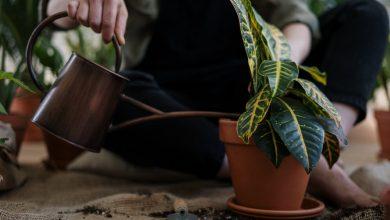 Photo of Kijk wat een kamerplant kan toevoegen in je interieur